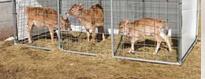 Logement des animaux & Kennels