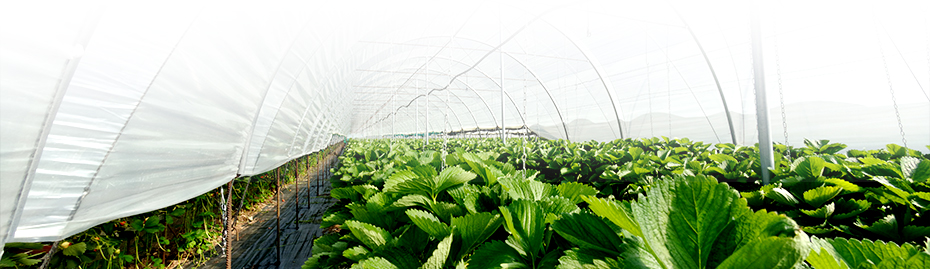 Greenhouses and commercial indoor growing